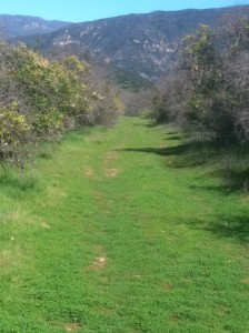 Orange Grove Gone Wild in Ventura River Preserve, Ojai, California