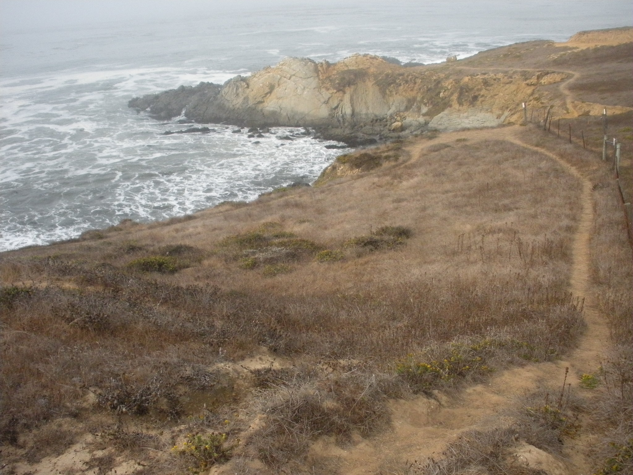 Harmony Headlands Trail  is also a stirring length of the California Coastal Trail.