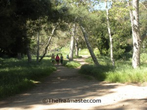 From Griffith Park's Vermont Canyon entrance, the trail leads through a sycamore grove.