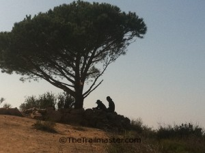 Walk to the Wisdom Tree in a less-traveled part of Griffith Park.
