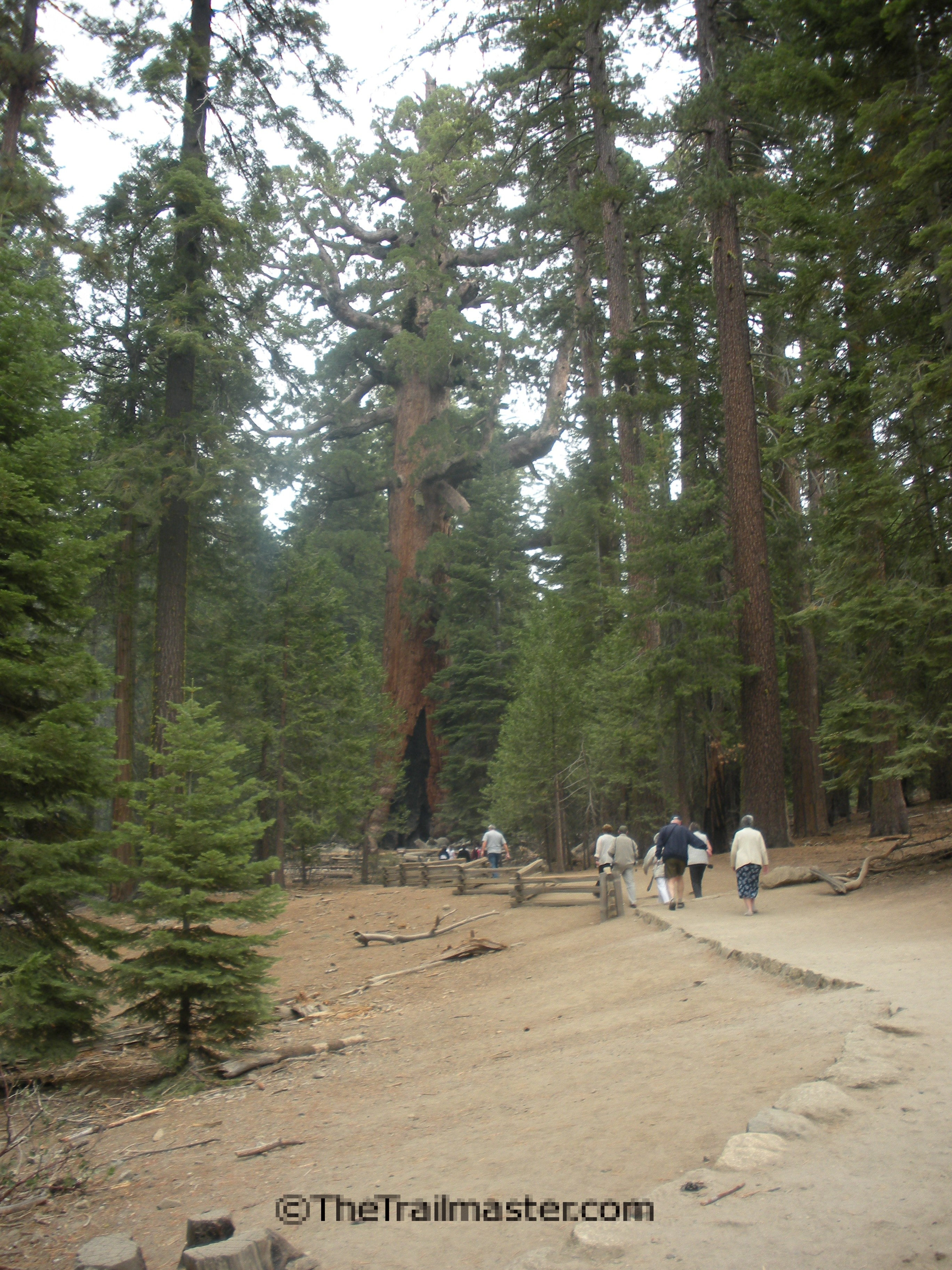 Mariposa Grove: Not a place for solitude, but you can hike past much of the crowd.