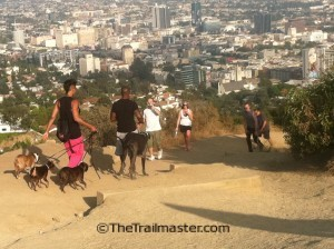 Runyon Canyon: Expect lots of two-legged and four-legged company on your hike.
