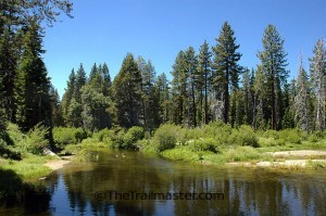 Follow General Creek on a lovely hike through Sugar Pine Point State Park