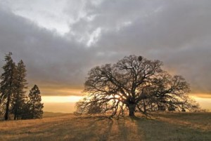 Lovely Henry Coe State Park (Morgan Hill Times)