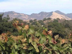 Mountain and (Santa Ynez) Valley vistas are highlights of Brooks' Trail.