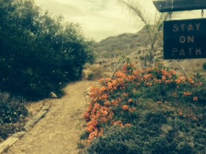 Hiking paths crisscross the Malibu Bluffs.