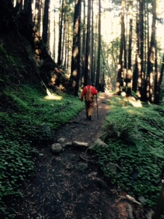On the trail amidst the redwoods in Limekiln SP