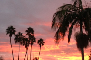 Sunset over the palm trees in downtown Santa Barbara