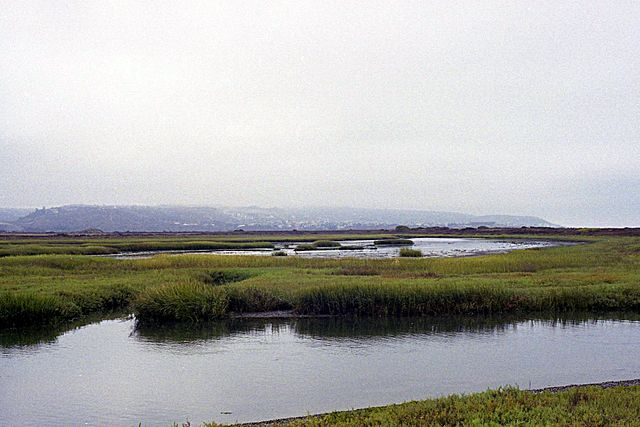 Take a hike and try to keep count of all the birds you see at Tijuana River Estuary. (courtesy, Osborn B, wikimedia)