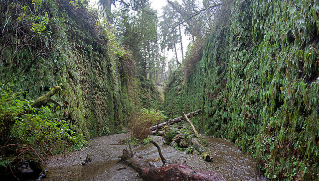 "Greatest ""Fern Canyon"" of them all in Prairie Creek Redwoods SP"